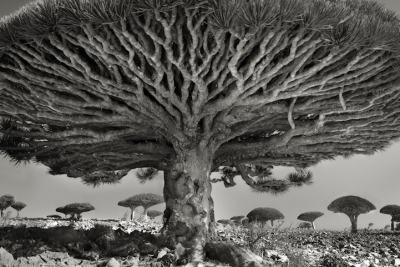 Най-старите дървета на света, един фотоапарат и 14 години скиталчество
