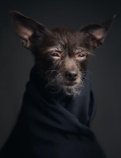 """Изразителни портрети показват, че животните са способни на """"човешки"""" чувства"""