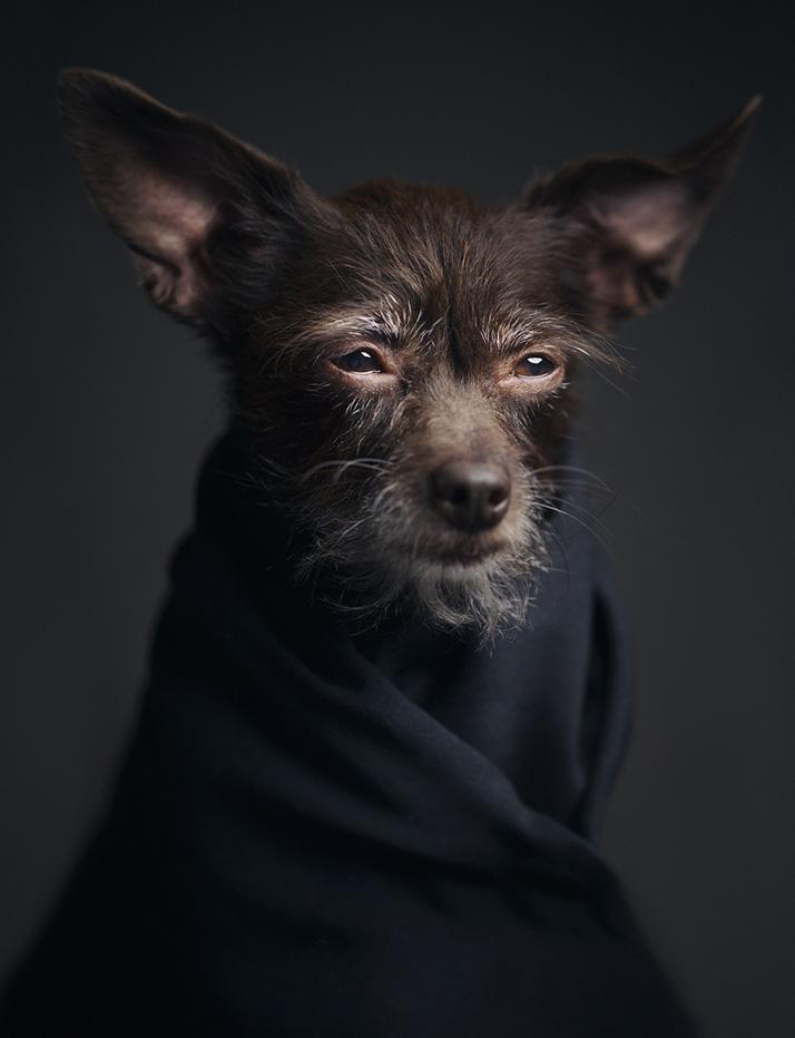 изразителни портрети на животни