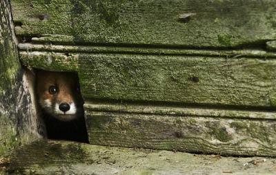 """Затрогващи снимки на диви животни, """"окупирали"""" изоставени къщи"""