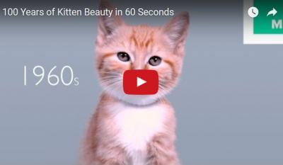 100 години котешка мода в 60 секунди (видео-пародия)