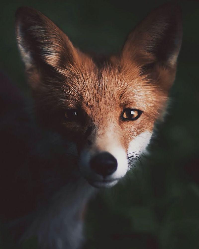 """Интимни портрети на диви животни """"улавят"""" душата им красиво"""
