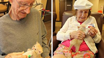 """Старчески дом и приют за животни се """"спасяват"""" взаимно"""