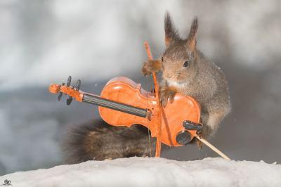 Катерици-музиканти вдъхновяват децата да учат азбуката (снимки)
