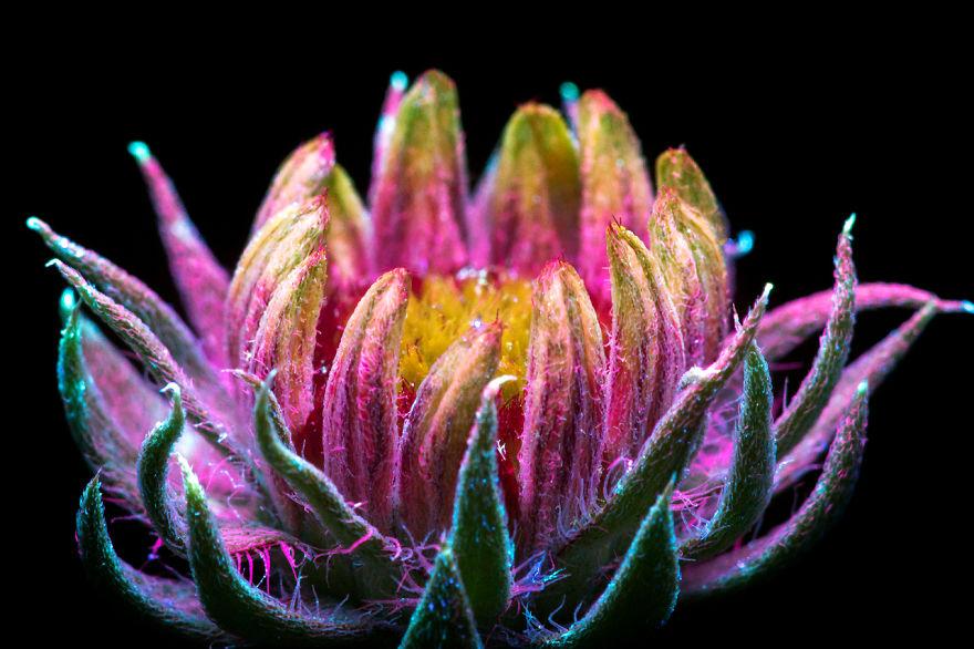 """Да заснемеш """"невидимото"""" сияние на цветята (снимки с неконвенционален метод)"""