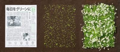 """""""Зелен"""" японски вестник – веднъж прочетен разцъфтява като мини градина"""
