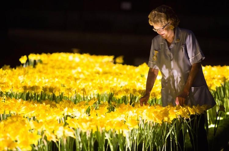 Арт инсталация от 2100 светещи нарциси (снимка)