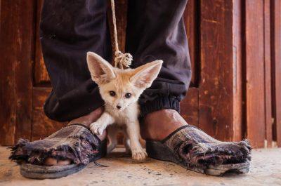 Фотографи се обединяват, за да денонсират престъпления срещу дивата природа (фотопроект)