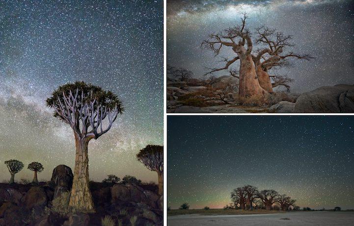 Вековните дървета, заснемани от пътуващ фотограф (снимки)