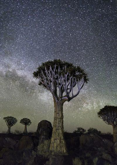 Вековните дървета, заснемани от пътуващ фотограф продължават да разказват истории. Този път през нощта
