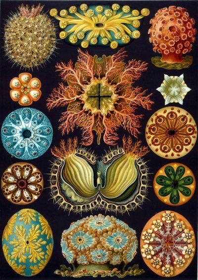Където наука и изкуство се срещат: илюстрациите на естественик от 19 век