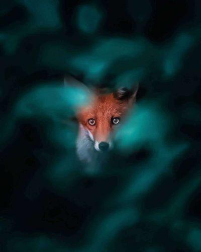 21-годишен фотограф успява да улови силната индивидуалност, отразена в микро израженията на… лисиците
