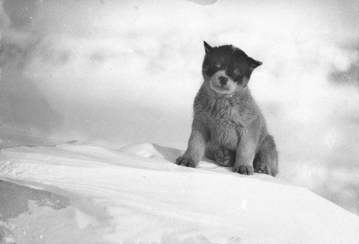 снимки от първата австралийска експедиция до Антарктида