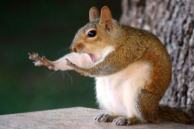 Най-смешните животни на планетата? Финалистите в Comedy Wildlife Photography Awards 2018 (снимки)