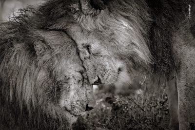 Удивителните снимки-победители в престижен фотоконкурс, посветен на дивата природа