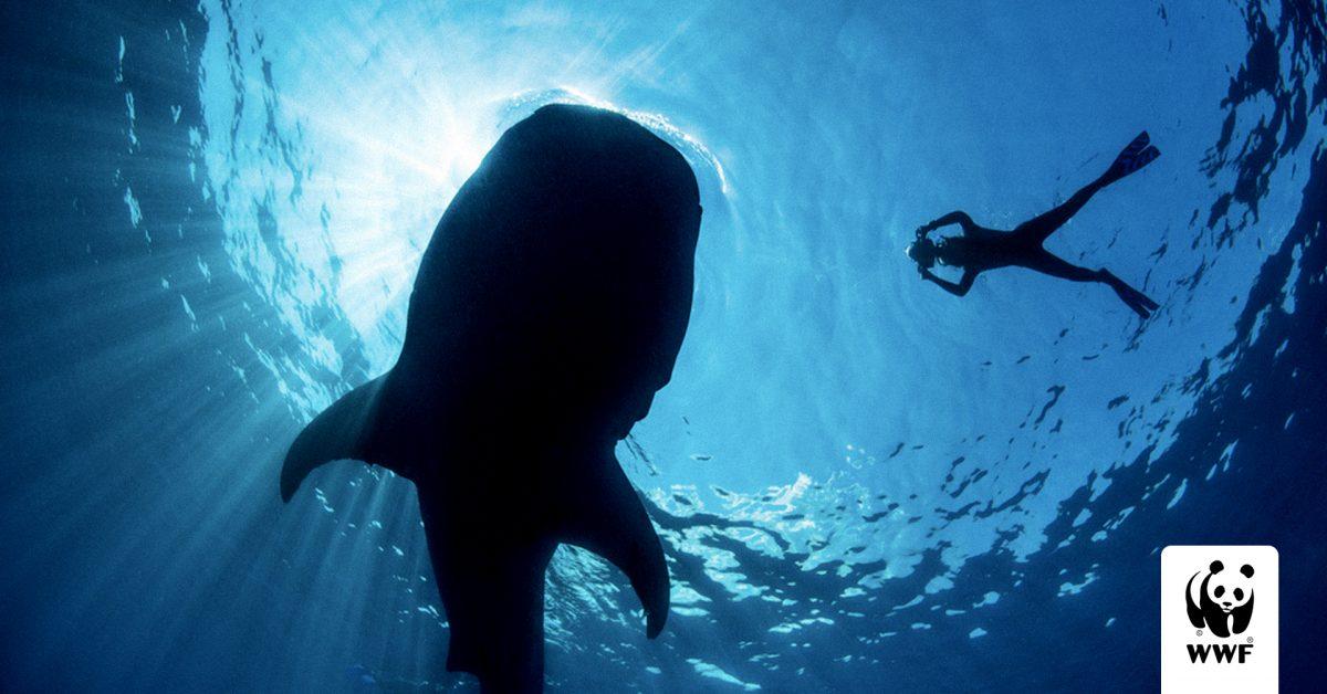 Our Planet: Coastal Seas (кадър)