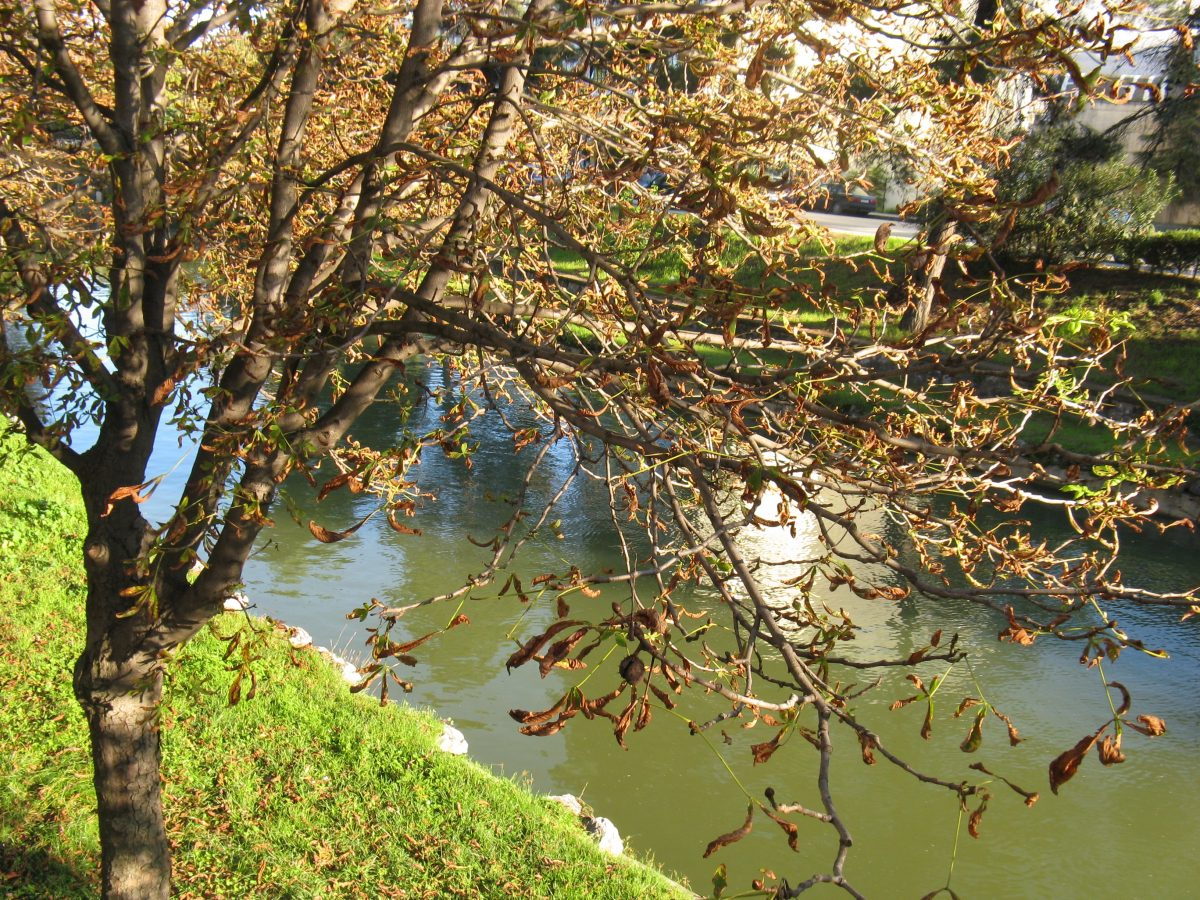 От Литеос до Перистери (снимка на река Литеос)